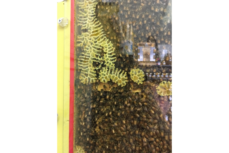 Observation bee hive